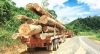 Malaysia Works To Prevent Illegal Timber Trade