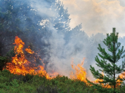 Socioeconomic Impacts Of Forest Fires Upon Forestry Sector